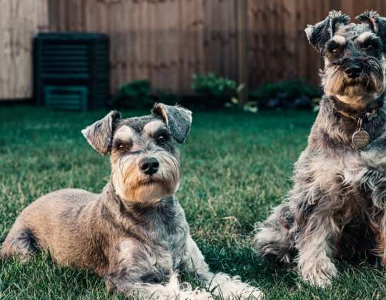 Neutering Your Male Dog: What You Need To Know